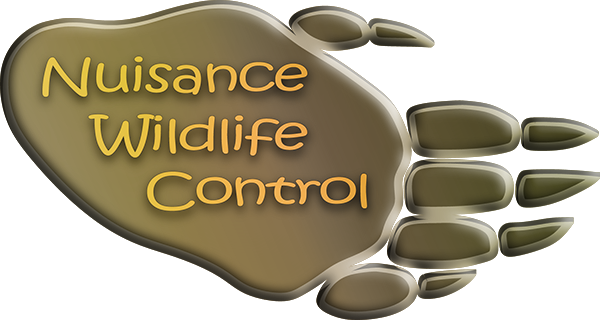 Wildlife Control and Removal