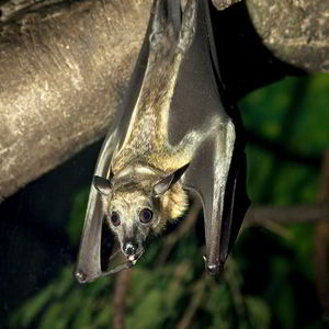 Image of a bat in Naperville, IL